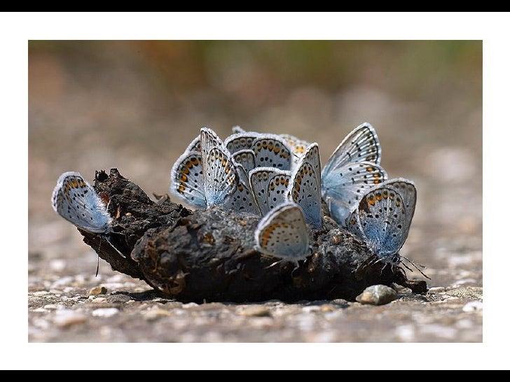 Butterflies Slide 2