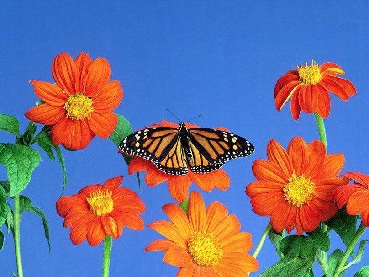 Butterflies Slide 3