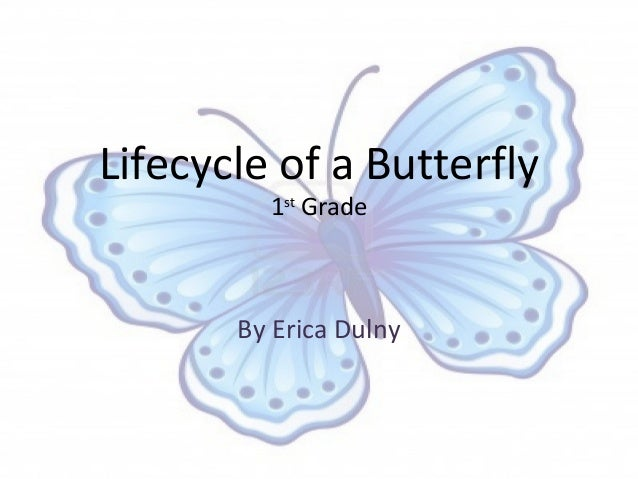 Lifecycle of a Butterfly         1st Grade       By Erica Dulny