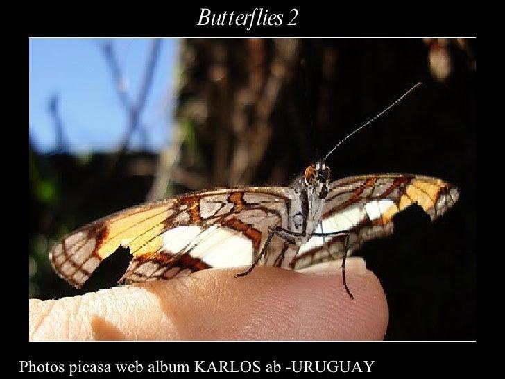 Photos picasa web album KARLOS ab -URUGUAY Butterflies 2
