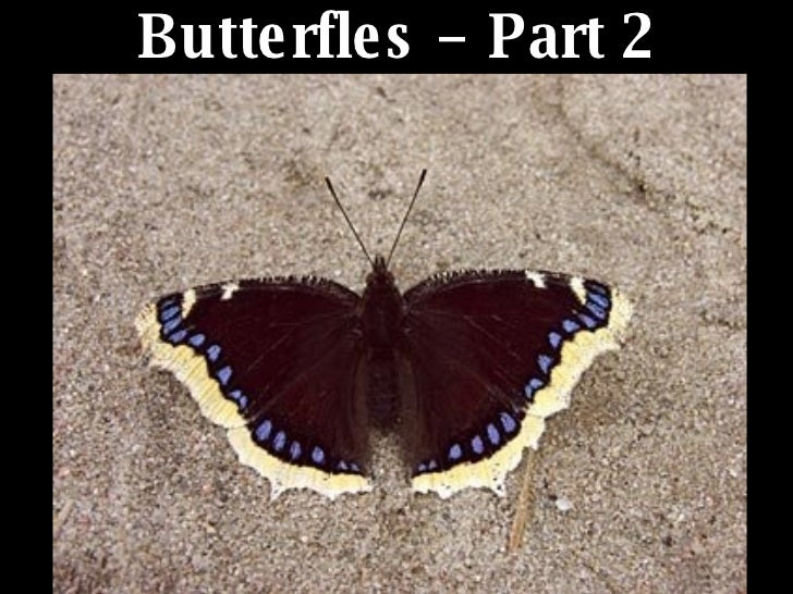 Butterfles – Part 2