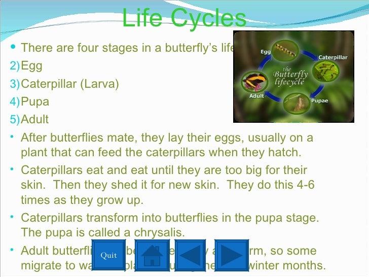 Life Cycles <ul><li>There are four stages in a butterfly's life cycle. </li></ul><ul><li>Egg </li></ul><ul><li>Caterpillar...