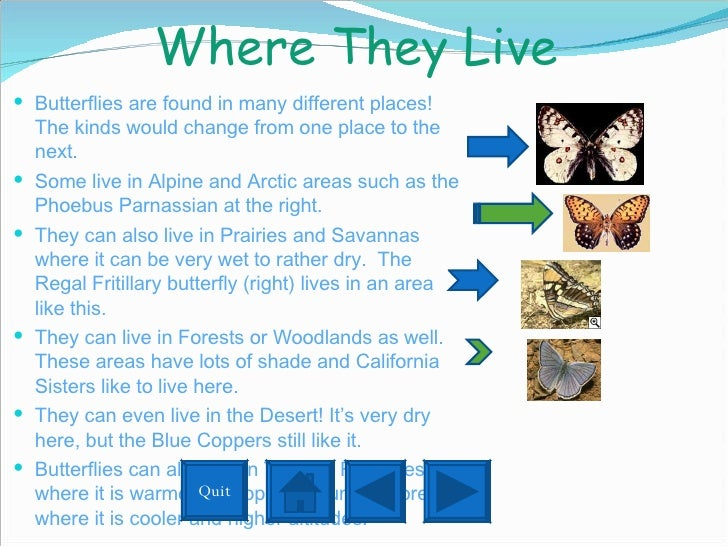 Where They Live  <ul><li>Butterflies are found in many different places!  The kinds would change from one place to the nex...