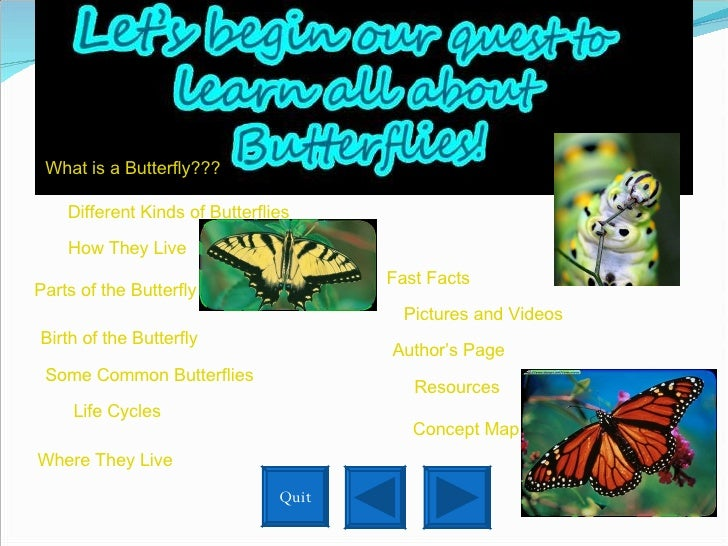 Different Kinds of Butterflies How They Live Where They Live Birth of the Butterfly Some Common Butterflies Life Cycles Pa...