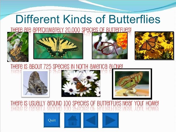 Different Kinds of Butterflies Quit