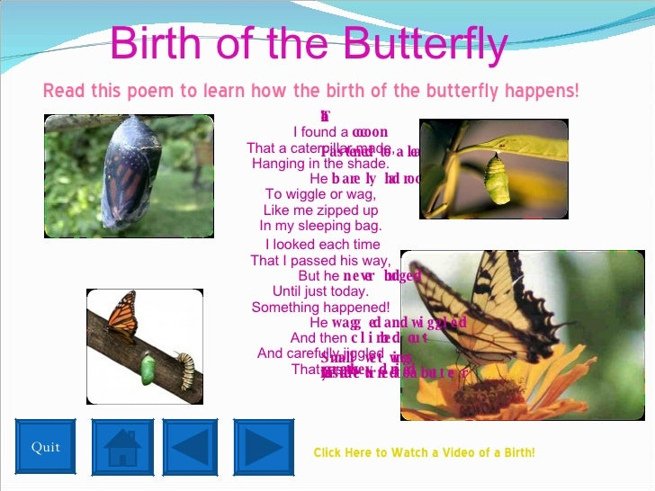 Birth of the Butterfly <ul><li>Read this poem to learn how the birth of the butterfly happens! </li></ul><ul><li>  The Coc...