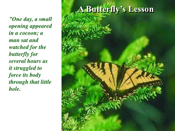 """A Butterfly's Lesson<br />""""One day, a small opening appeared in a cocoon; a man sat and watched for the butterfly for seve..."""