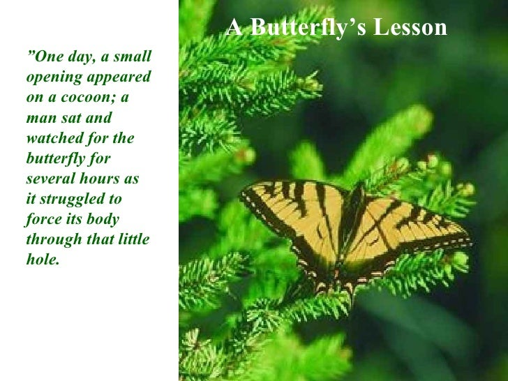 "A Butterfly's Lesson "" One day, a small opening appeared on a cocoon; a man sat and watched for the butterfly for several ..."