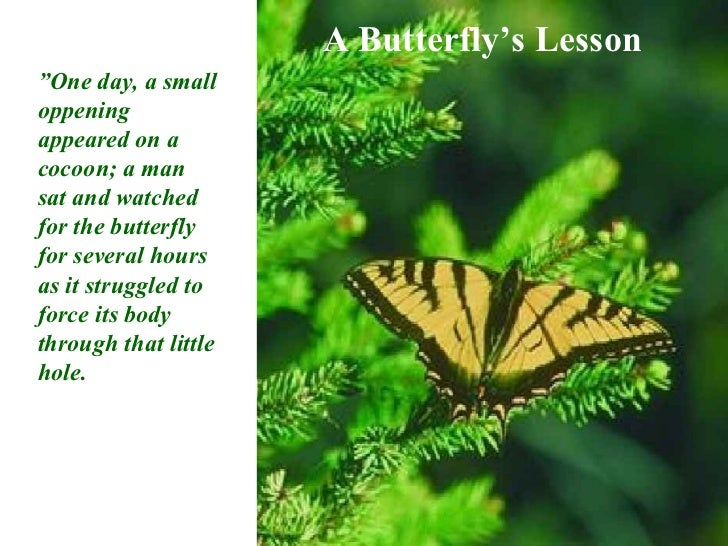 "A Butterfly's Lesson""One day, a smalloppeningappeared on acocoon; a mansat and watchedfor the butterflyfor several hoursas..."