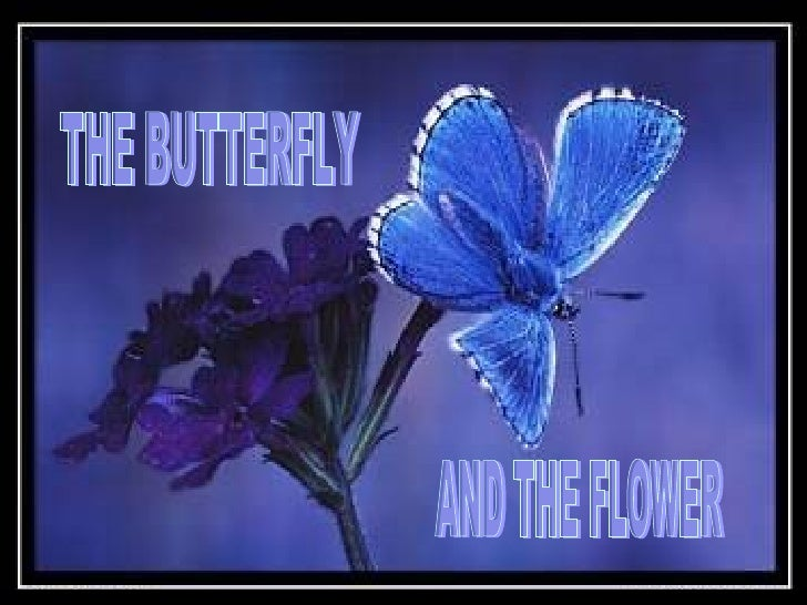 THE BUTTERFLY AND THE FLOWER