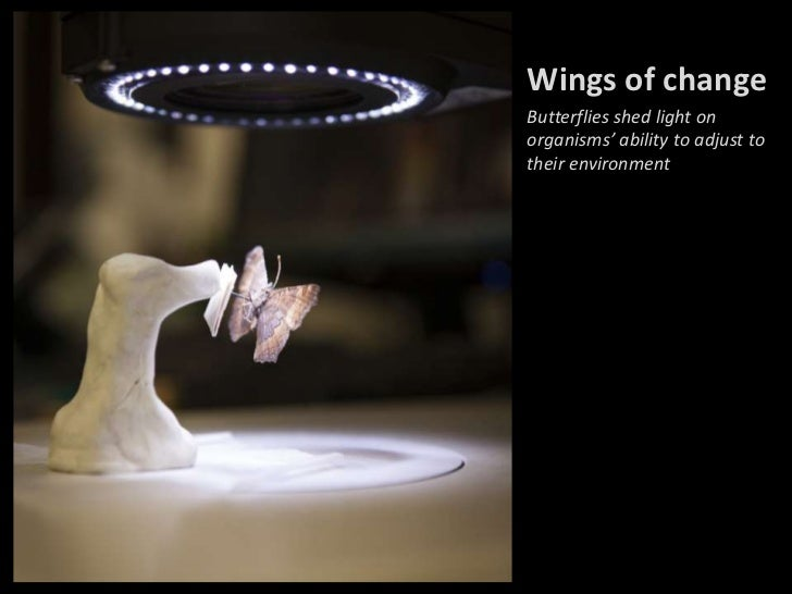 Wings of changeButterflies shed light onorganisms' ability to adjust totheir environment
