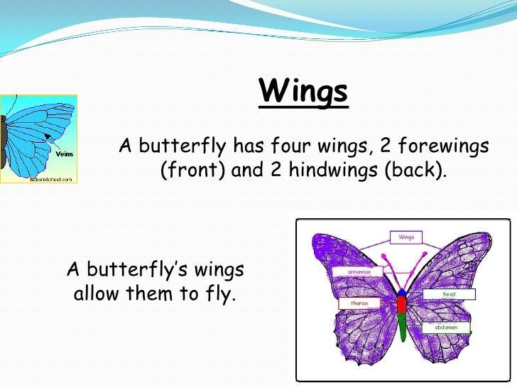 Butterfly anatomy symmetry presentation