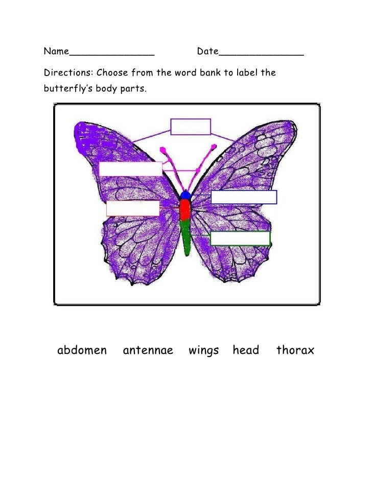 Name______________Date______________<br />19050607695Directions: Choose from the word bank to label the butterfly's body p...