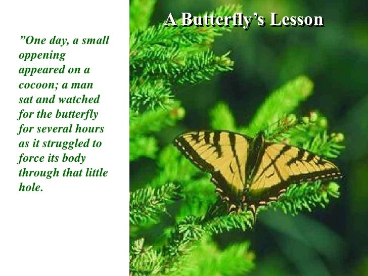 """A Butterfly's Lesson<br />""""One day, a small oppening appeared on a cocoon; a man sat and watched for the butterfly for sev..."""