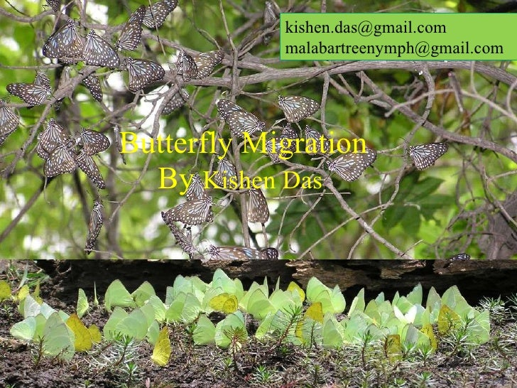 Butterfly Migration By  Kishen Das   kishen.das@gmail.com  [email_address]