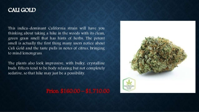 Buy Hybrid Cannabis Seeds at Canna Wholesalers