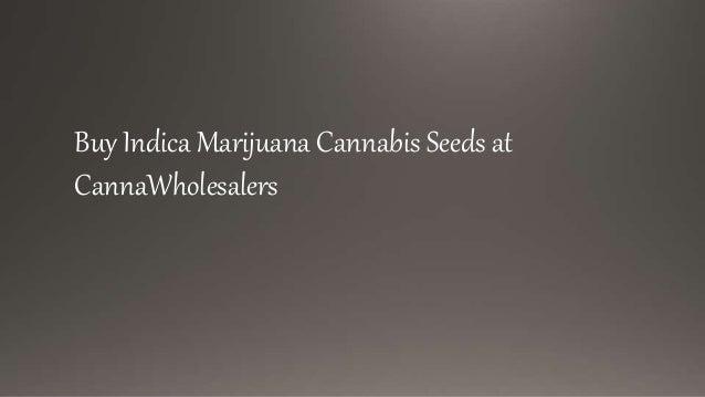 Buy Indica Marijuana Cannabis Seeds Online
