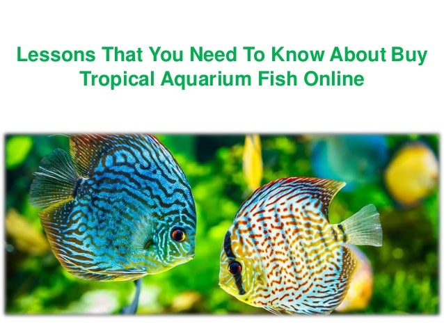 Buy Tropical Aquarium Fish Online