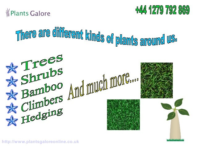 Buy various types of plants online for your home for Buy plans online