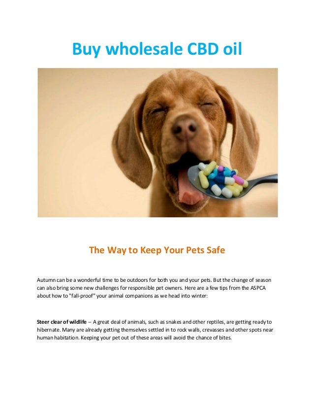 Why should you buy wholesale CBD?