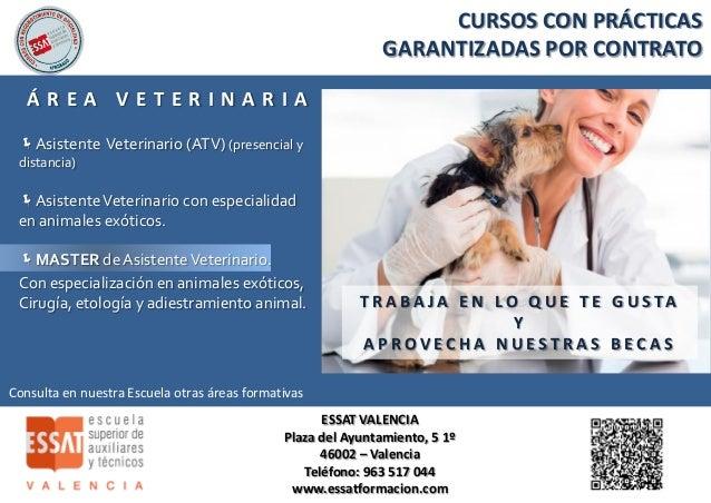 Estudiar auxiliar de veterinaria en Valencia? Con Essat Formación es…