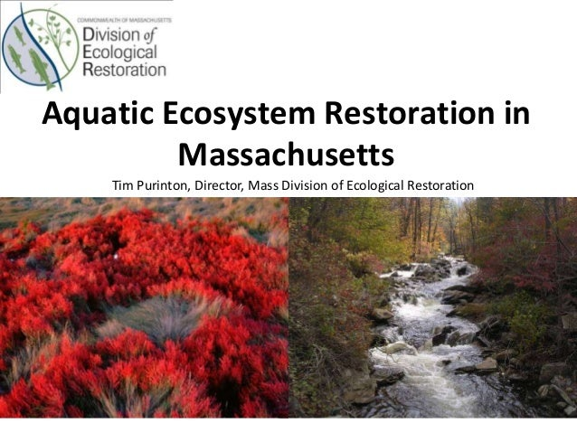 Aquatic Ecosystem Restoration in Massachusetts Tim Purinton, Director, Mass Division of Ecological Restoration