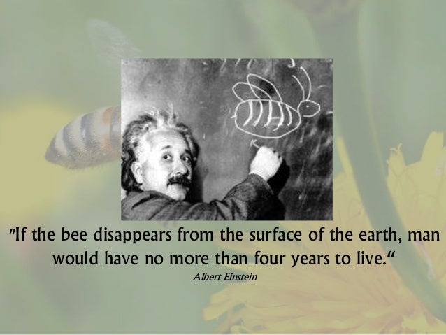 10 Reasons Why Bees Are Important