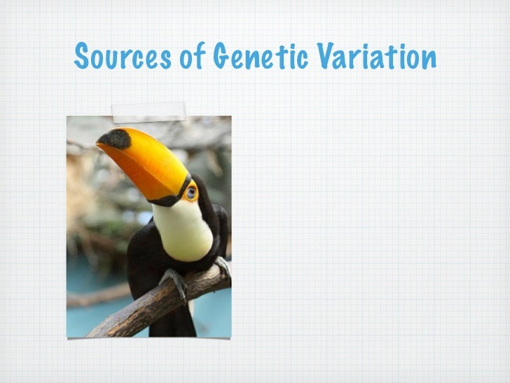 What are the three sources of genetic variation in sexually reproducing individuals