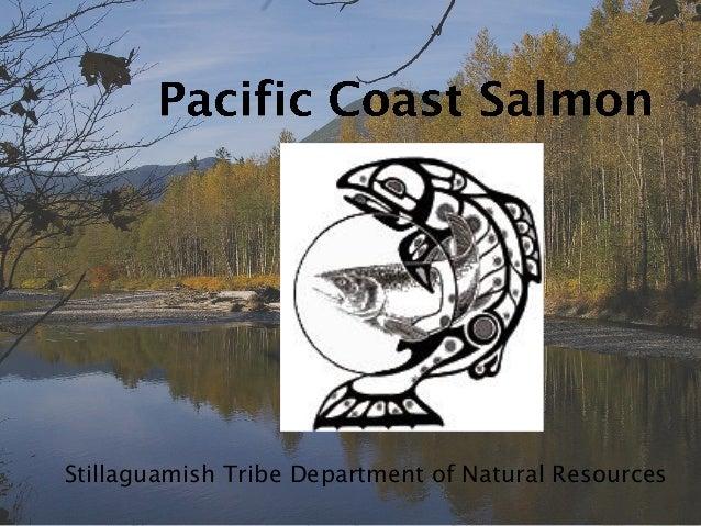 Stillaguamish Tribe Department of Natural Resources