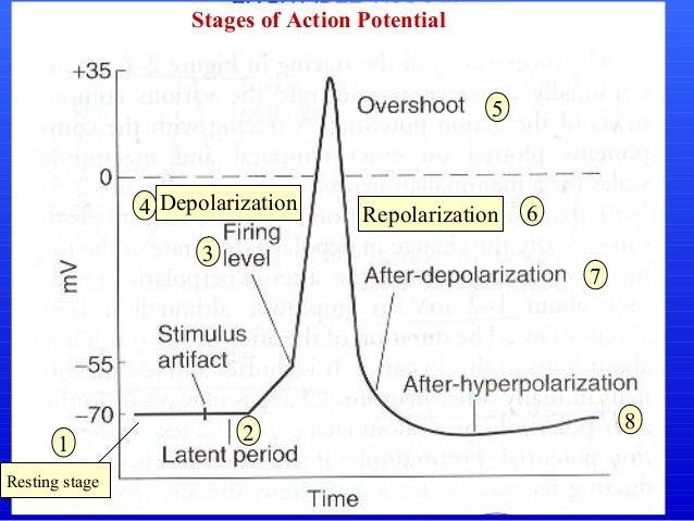 Action potential dr rashid mahmood 9 10 ccuart Choice Image