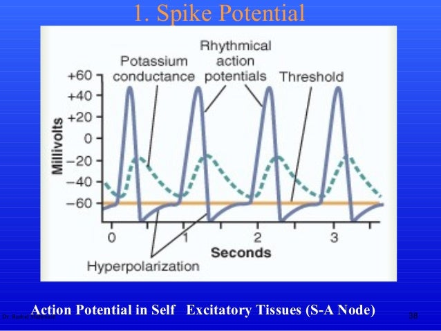 Action potential biphasic action potential 38 ccuart Choice Image