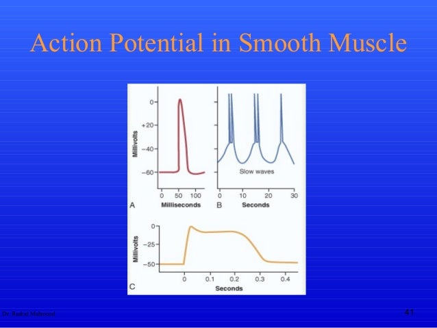 Action potential dr rashid mahmood 41 action potential in smooth muscle ccuart Choice Image