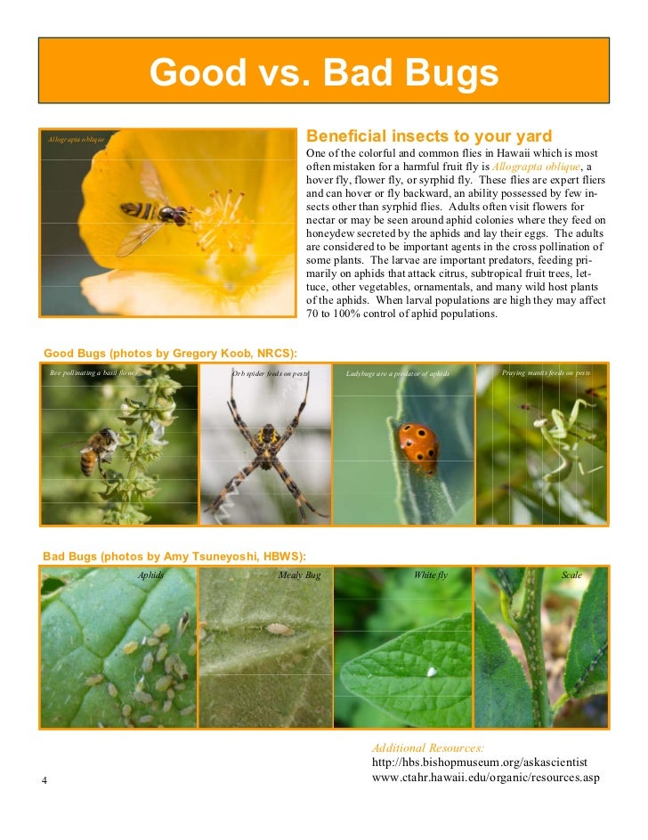 HI Hawaii Backyard Conservation - Backyard conservation