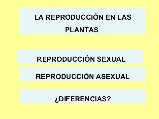 LA REPRODUCCIÓN EN LAS PLANTAS  REPRODUCCIÓN SEXUAL REPRODUCCIÓN ASEXUAL ¿DIFERENCIAS?