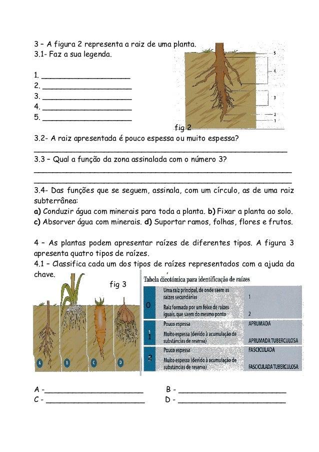 3 – A figura 2 representa a raiz de uma planta. 3.1- Faz a sua legenda. 1. ___________________ 2. ___________________ 3. _...