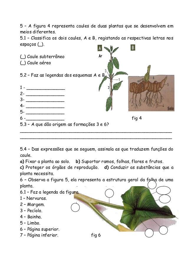 5 – A figura 4 representa caules de duas plantas que se desenvolvem em meios diferentes. 5.1 – Classifica os dois caules, ...