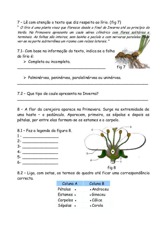 """7 – Lê com atenção o texto que diz respeito ao lírio. (fig 7) """" O lírio é uma planta vivaz que floresce desde o final do I..."""