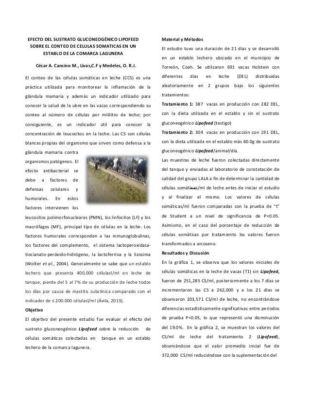 EFECTO DEL SUSTRATO GLUCONEOGÉNICO LIPOFEED SOBRE EL CONTEO DE CELULAS SOMATICAS EN UN ESTABLO DE LA COMARCA LAGUNERA Césa...