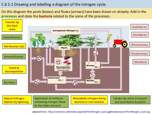 c 6 nitrogen cycle pptx labeled diagram of the rock cycle labelling a diagram of the nitrogen cycle 15