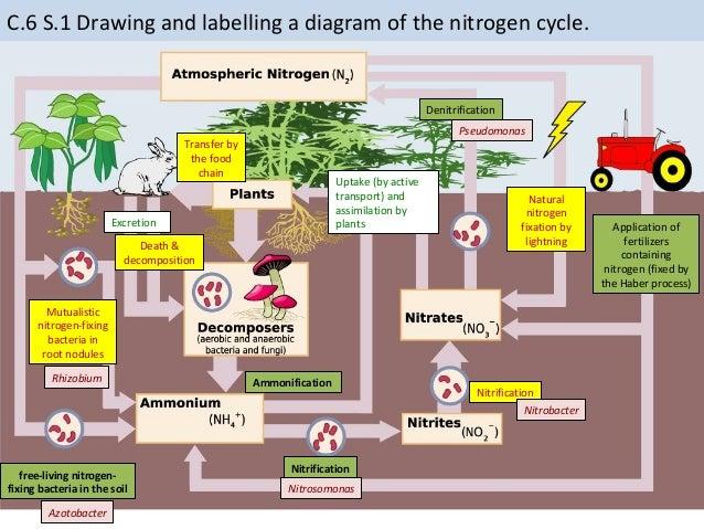 Label Nitrogen Cycle Diagram Online Schematic Diagram