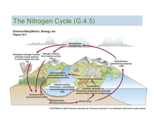 C6 nitrogen cycle pptx the nitrogen cycle g45 ccuart Gallery