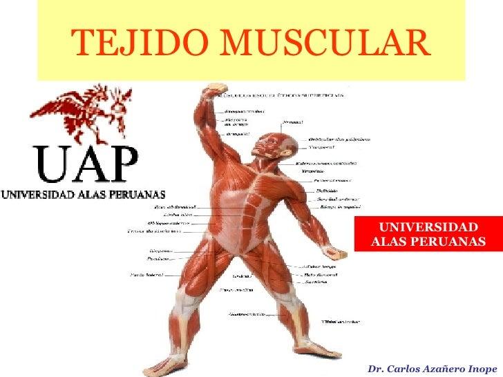 TEJIDO MUSCULAR Dr. Carlos Azañero Inope UNIVERSIDAD ALAS PERUANAS