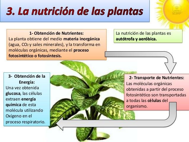 C naturales tema 9 for Para q sirven las plantas ornamentales
