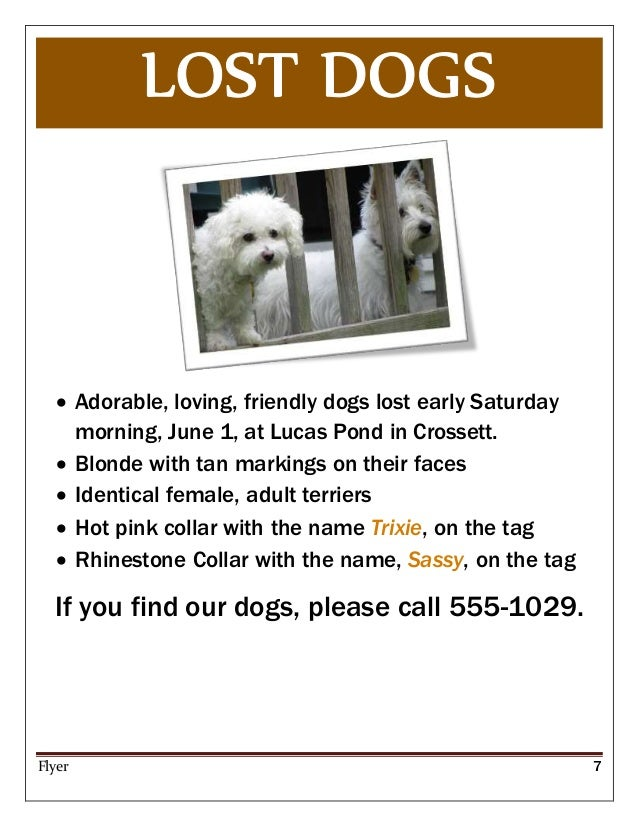 Lost Dog Flyers  BesikEightyCo
