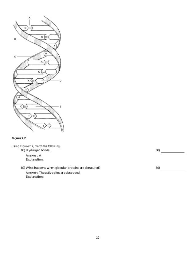 Human anatomy and physiology by Marieb 8th test bank chapter 2