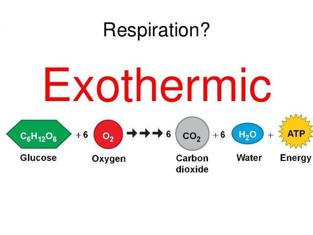 Endothermic Reaction Examples Equation