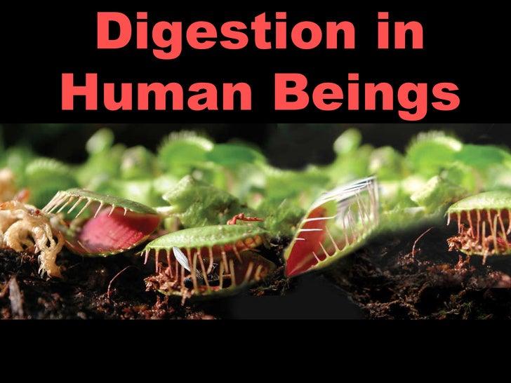 Digestion in Human Beings