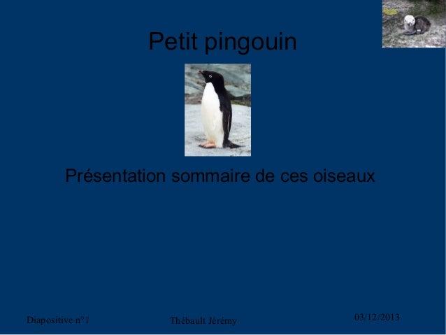 Petit pingouin  Présentation sommaire de ces oiseaux  Diapositive n°1  Thébault Jérémy  03/12/2013