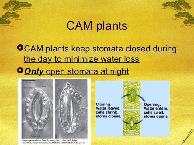 AP Bio Ch. 10 C3 c4 and cam plants