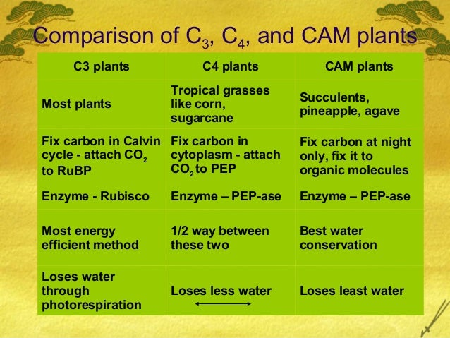c4 and cam plants C4 and cam plants are plants that use certain special compounds to gather carbon dioxide (co 2 ) during photosynthesisusing these compounds allows these plants to extract more co 2 from a given amount of air, helping them prevent water loss in dry climates.